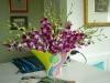 c-orchids-1
