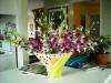 d-orchids-2