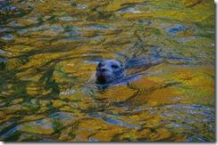 Seal2.web